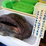 アブラボウズ(深海魚)が白い坊主?味や値段や食べれる場所は?下痢の危険がありおしつけとは?有弘行のダレトク!?