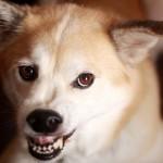 臓器移植ドナーが薬物中毒で狂犬病に感染したジョシュア達の原因は?予防法はある?[アンビリバボー]