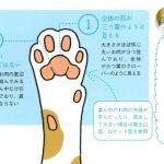 長靴を履いたネコの動画が可愛すぎ・肉球うらない・秘密まとめ【月曜から夜更かし】